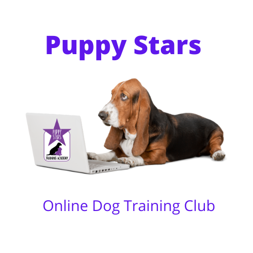 45 Minute Online Dog Training Club